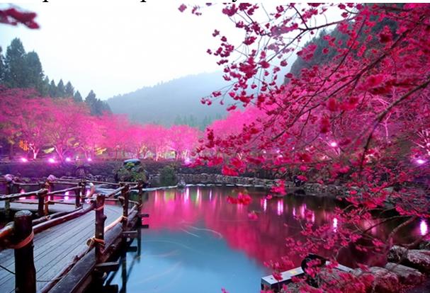 Японское фото 7553 фотография