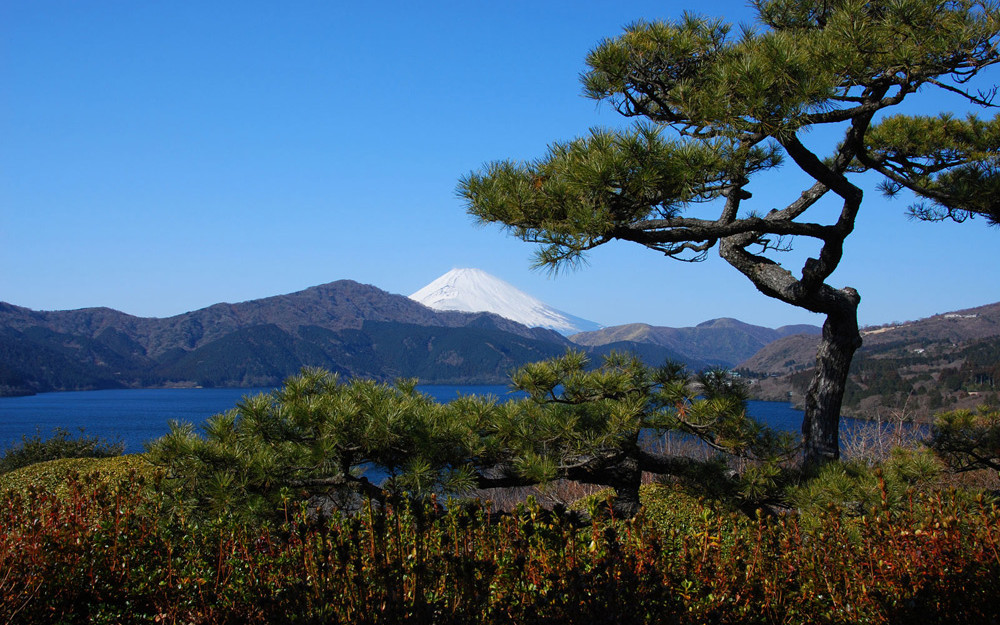 c_1000_625_16777215_00_images_japan_hakone_asi_1_2.jpg