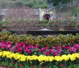 flora garden 3