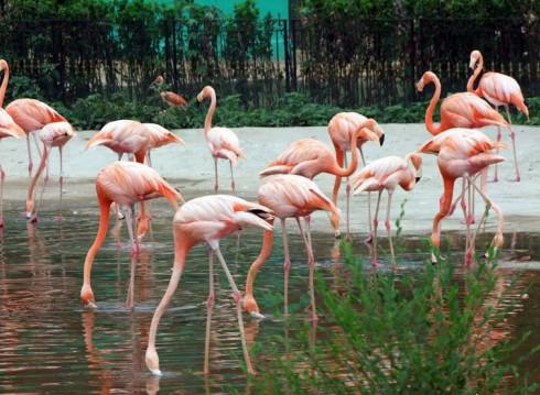 Парк птиц Бэйдайхэ