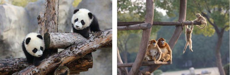 Зоопарк Шанхай