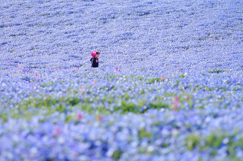 hitachi seaside park 1